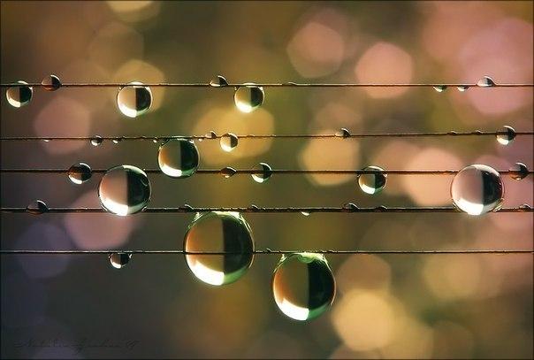 نت، کلید و وزن در موسیقی